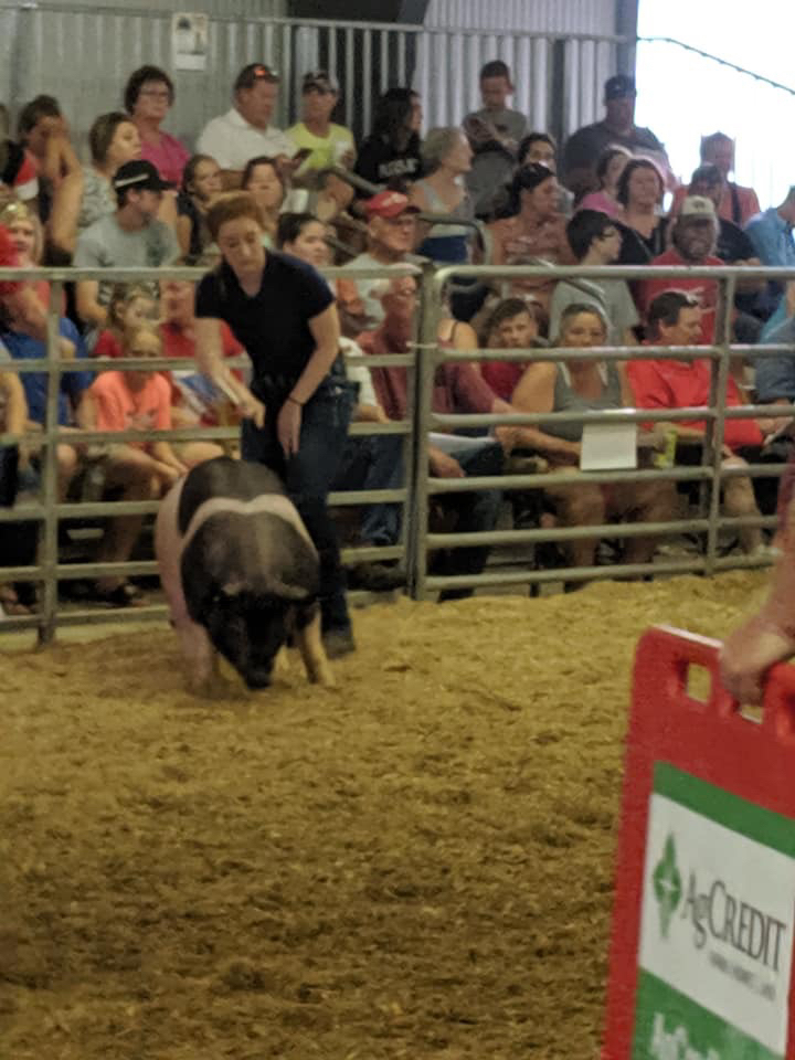 Marion County Fair.